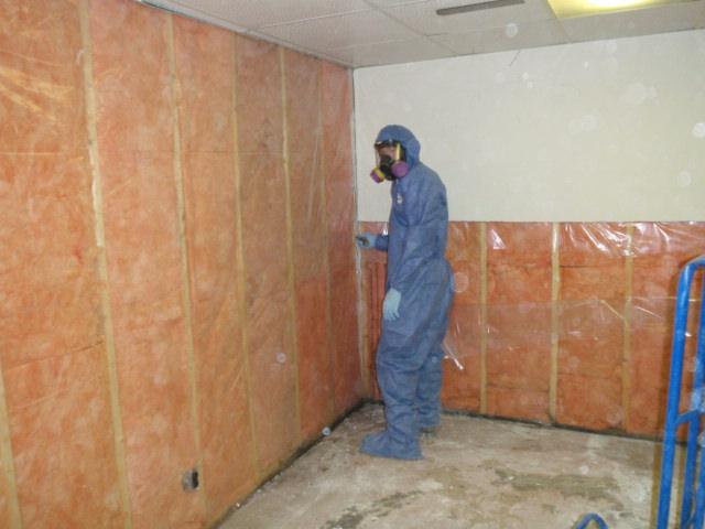Saskatoon mold removal